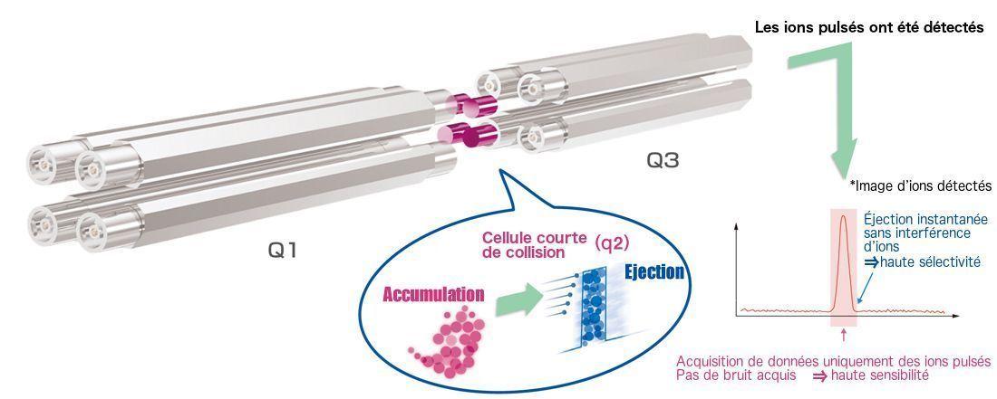 Cellule courte de collision - spectromètre de masse JEOL JMS-TQ4000GC